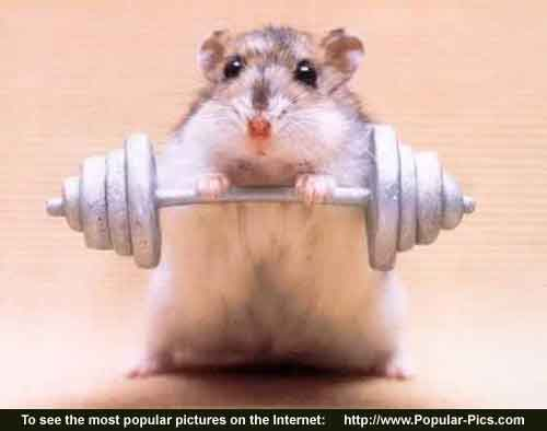 Body_Building_Mouse